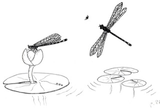 dragon-flies-on-pond